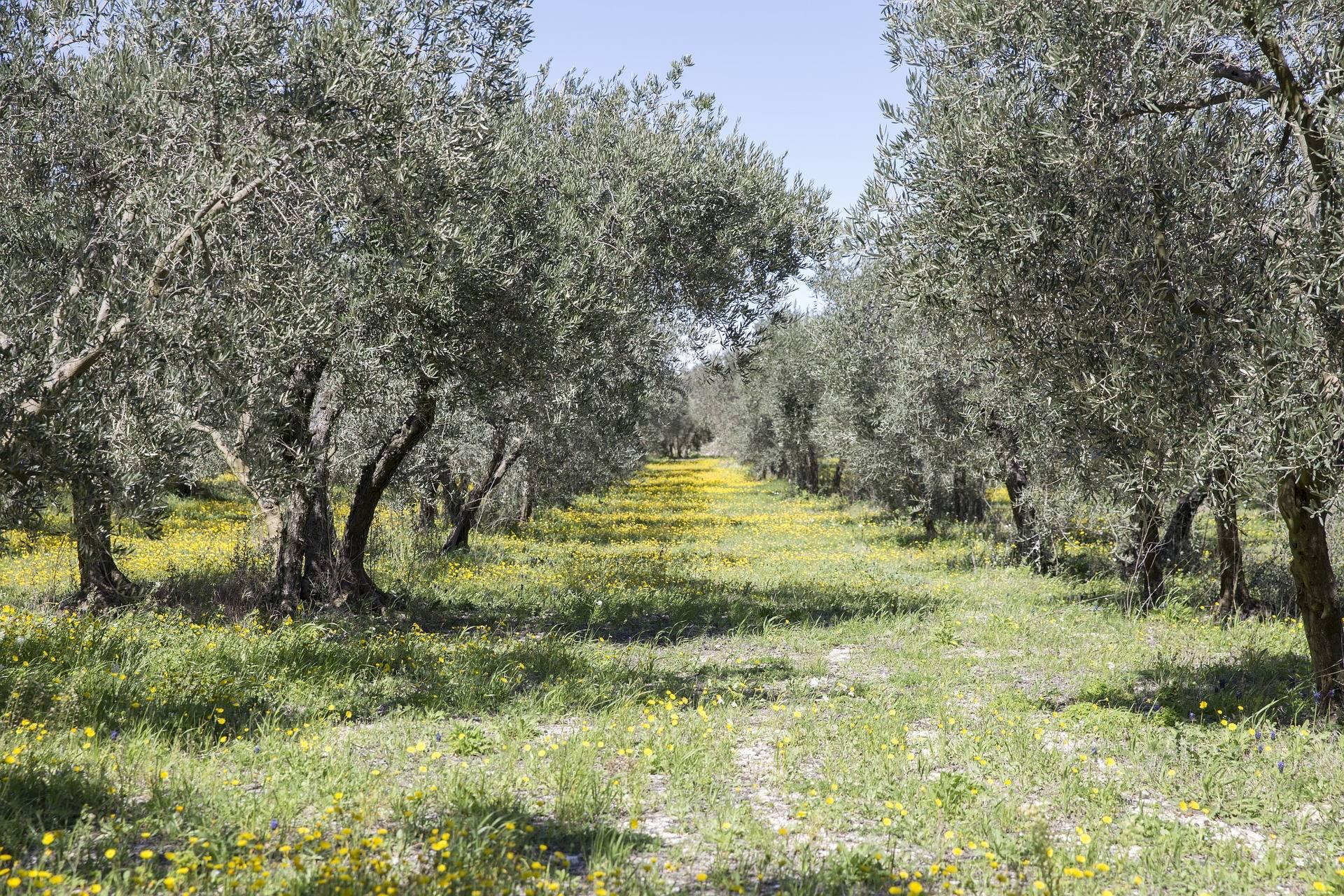 Agriculture: étude sectorielle 2018