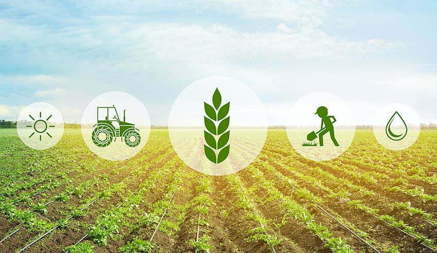 Agriculture: étude sectorielle 2019